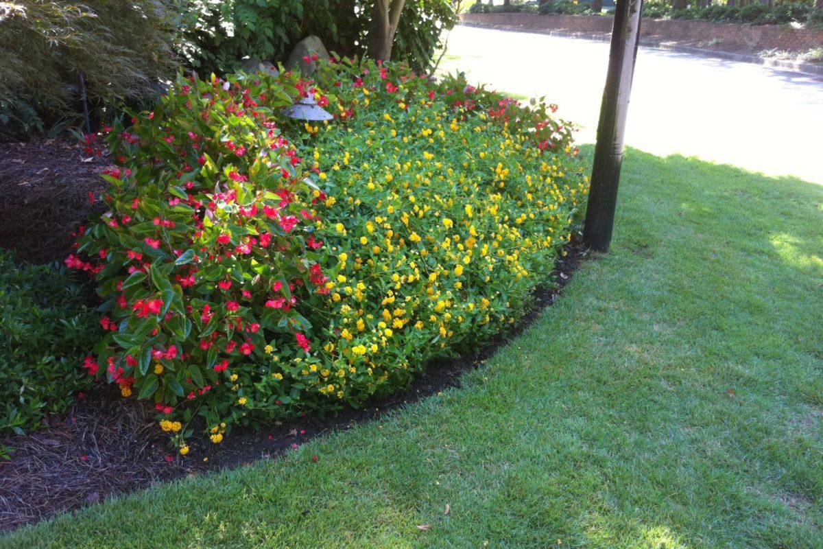 Gwinnett Lawn Care & Landscaping 1